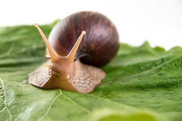 Snail on green sheet