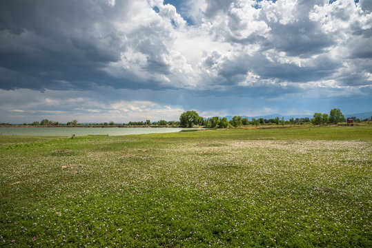 Storm clouds over a field of wildflowers near McIntosh Lake in Longmont, Colorado