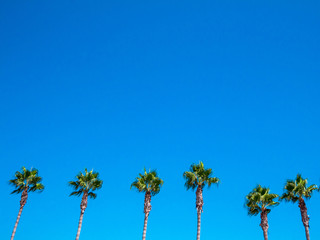 Palm on blue sky, blue sky background