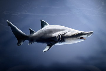 subtropical and temperate sea water Sand tiger shark pointed protruding teeth 10 feet long