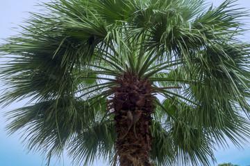 Tropical tall palm tree close up