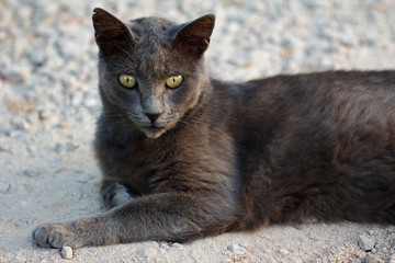 Feral grey-brown cat in the countryside