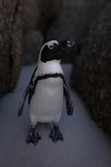 Penguin on beach