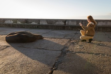 Woman taking picture of sea lion with mobile phone