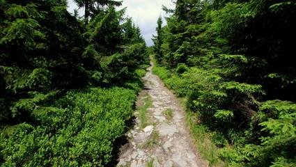 Fototapeta Tajemnicza ścieżka prowadząca przez zielony las obraz