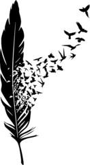 Feder mit Vogelschwarm