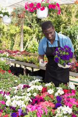 Florist man working in greenhouse