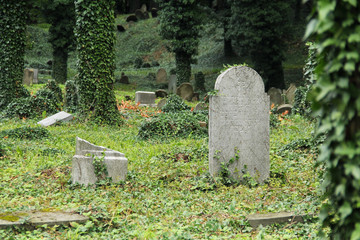 some headstones covered with ivy on the old jewish cemetery in Cieszyn, Poland