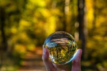 Glaskugel im herbst Wald