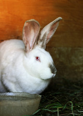 A large rabbit sits in a cage next to a Cup of water.