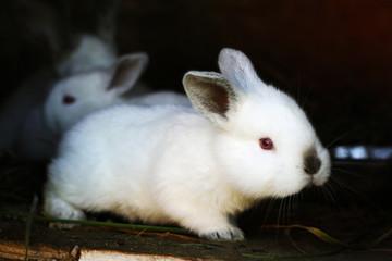 Growing small rabbits.