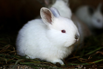 Little fluffy rabbit in the foreground.