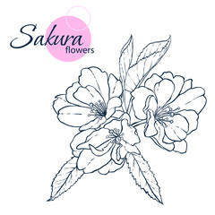 Hand drawn Japanese blossom sakura flowers. Line-art style illustration. Coloring book for adult and children.