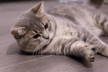 cute cat at home, close-up