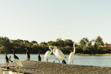 herons in the fishing village
