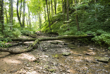 outdoor stream