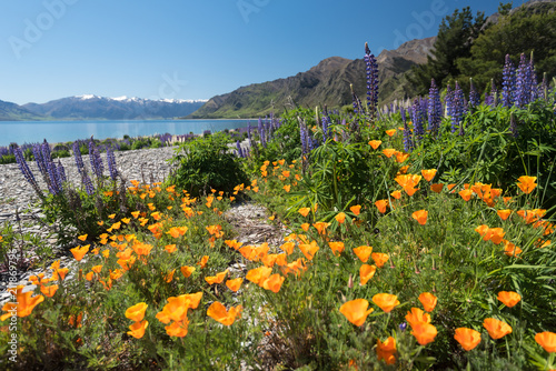 Wild Spring Flowers On The Shore Of Lake Hawea In The South Island