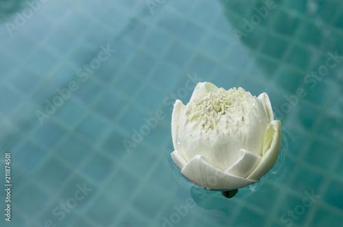 White lotus flower floating on swimming pool water buddhist symbol white lotus flower floating on swimming pool water buddhist symbol peace and religion concept mightylinksfo