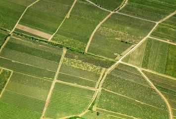 Weinberge vor Osthofen in der Pfalz