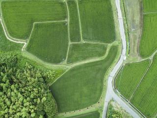 田んぼの中にある一本道を上から見た図