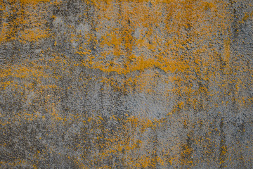 concrete surface with yellow moss and mold