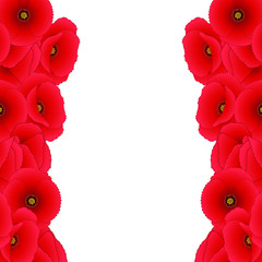 Red Corn Poppy Border