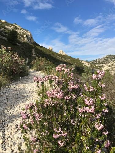 Pink mediterranean flowers along a rocky path stock photo and pink mediterranean flowers along a rocky path mightylinksfo