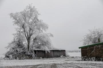 Un arbre et un petit hangar sous la neige dans la campagne de Moselle en hiver