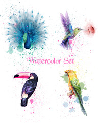 Watercolor birds set Vector. Peacock, parrot, humming bird
