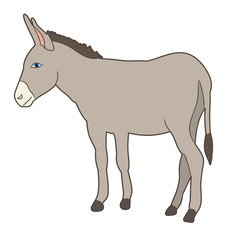 vector, isolated donkey standing in front of white background
