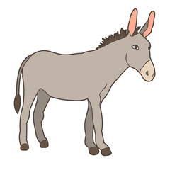 gray donkey standing on white background