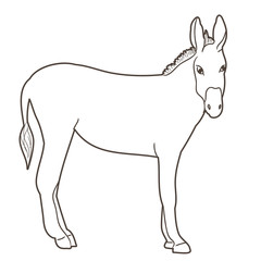 isolated sketch of a donkey standing