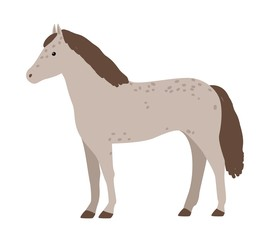 Cute grey horse isolated on white background. Adorable pony with mane. Funny cartoon domestic equine animal, farm livestock. Flat colorful hand drawn vector illustration in modern trendy style.