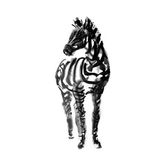 Ink zebra sketch isolated on white background. Front view of zebra Handdrawn illustration.