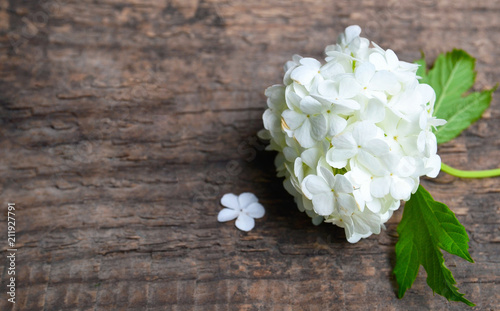White Viburnum Or Snowball Flowers On Old Wooden Background With