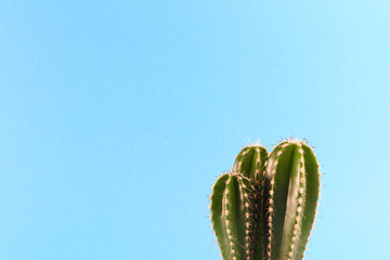 Small green cactus on blue background