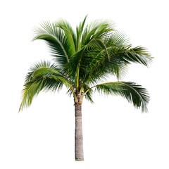 Foto op Canvas Palm boom coconut palm tree
