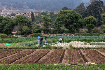 The Vegetable Fields of Almolonga, Guatemala