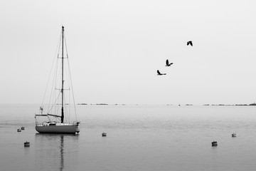 Black and white sail boat in calm water docked in port with sea gulls