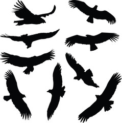 Silhouette illustrations of South American Condors in flight.