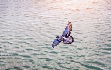 bird flying on water at sunset
