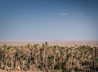 desert landscape view in garmeh oasis southern iran