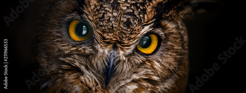Wall mural Yellow eyes of horned owl close up on a dark background.