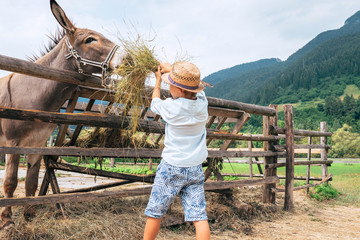 Little boy helps to feed a donkey on the farm
