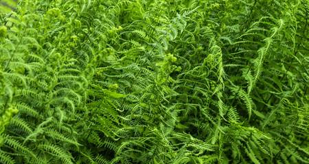 Farne Vegetation Landschaft