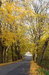 trees along the road with yellow leaves, wet autumn road