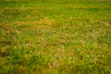 burned fresh cut grass