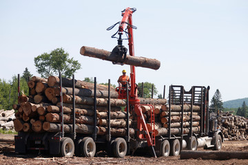 A worker unloads logs at the Murray Brothers Lumber Company in Madawaska