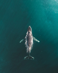 Majestic Whales 3