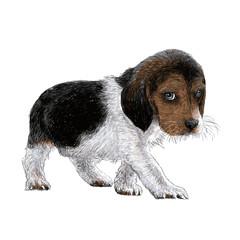 beagle hand drawn